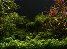 freshwater light